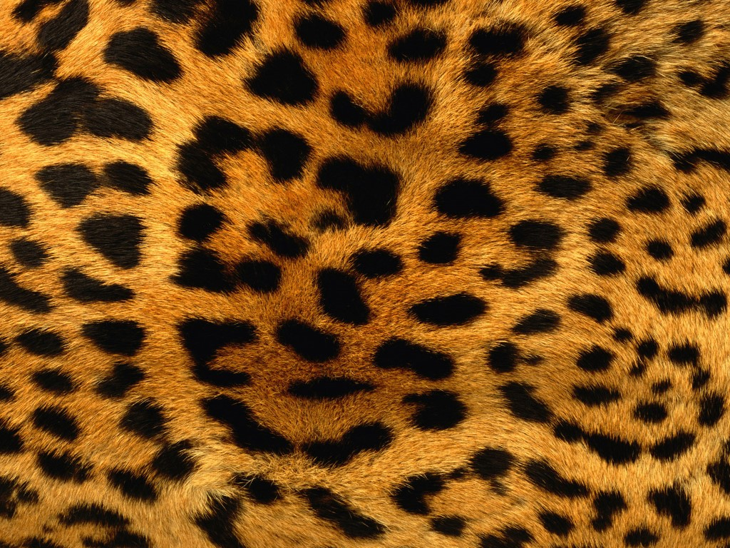 Nature Wallpaper: Leopard Print