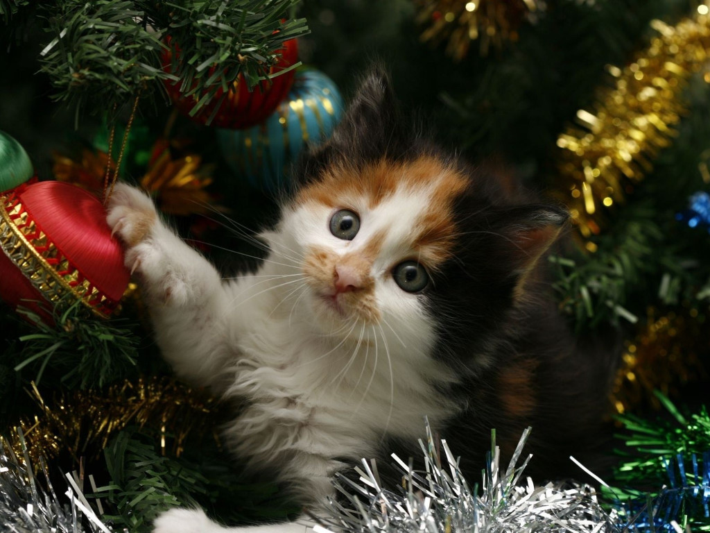 Nature Wallpaper: Lil Cat - Xmas