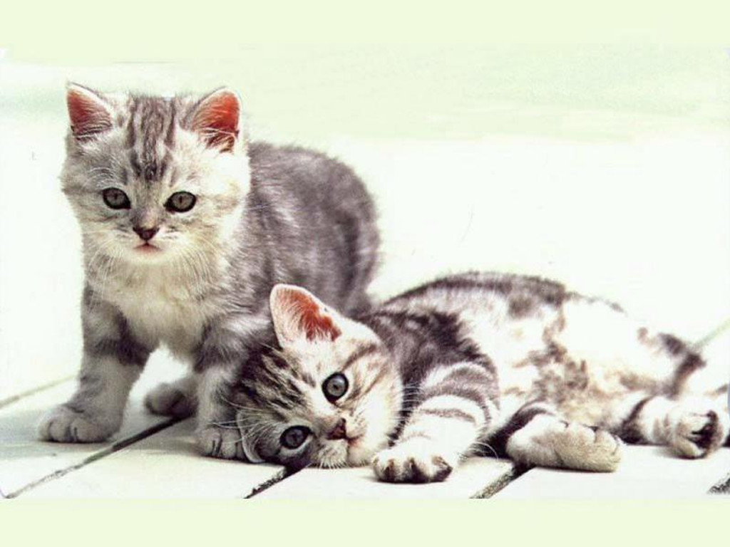 Nature Wallpaper: Little Cats