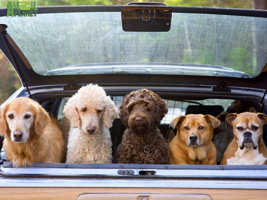 Nature Wallpaper: Load of Dogs