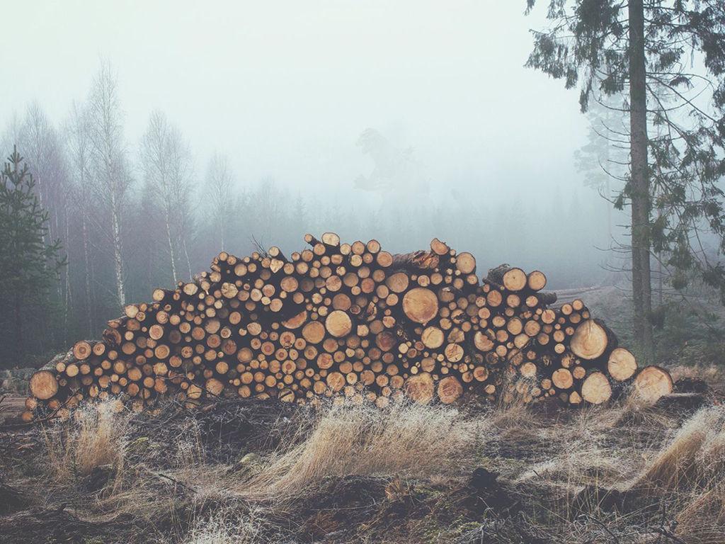 Nature Wallpaper: Logs
