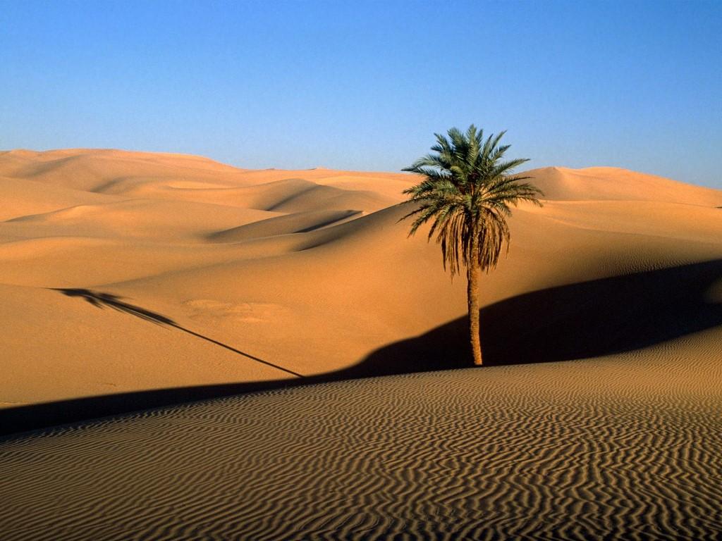Nature Wallpaper: Lone Palm - Sahara Desert