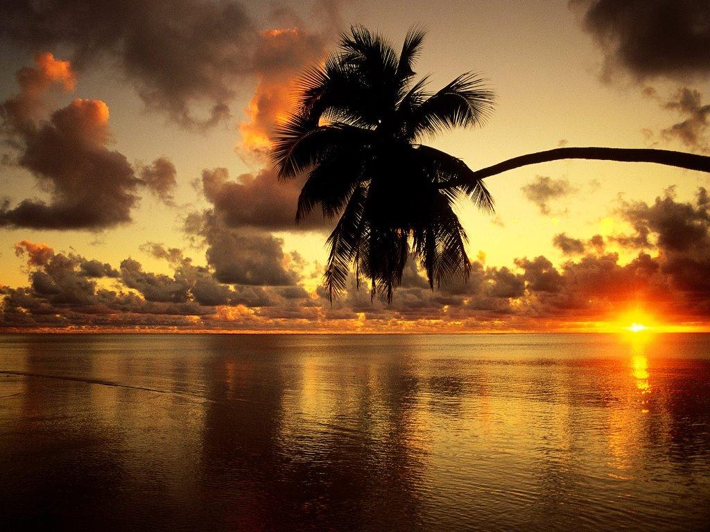 Nature Wallpaper: Lone Palm - Sunset