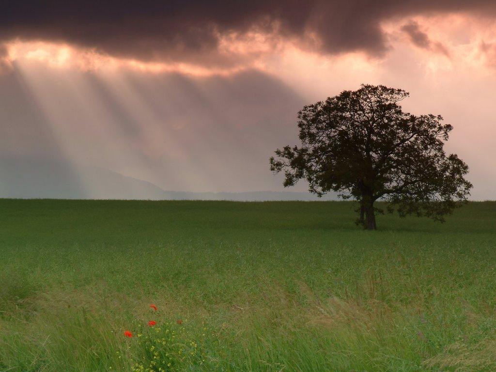 Nature Wallpaper: Lone Tree