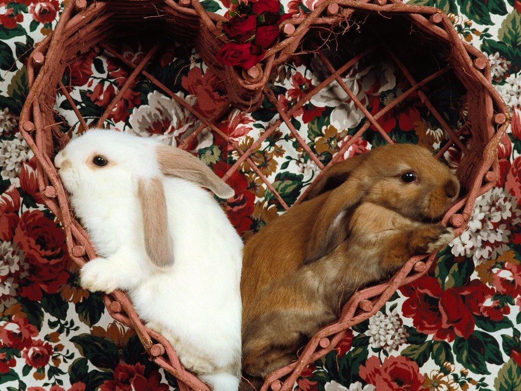 Nature Wallpaper: Love Bunnies