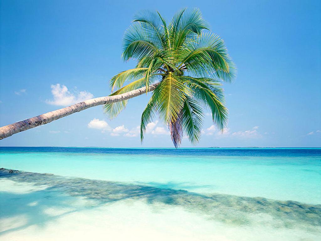 Nature Wallpaper: Maldivas Island