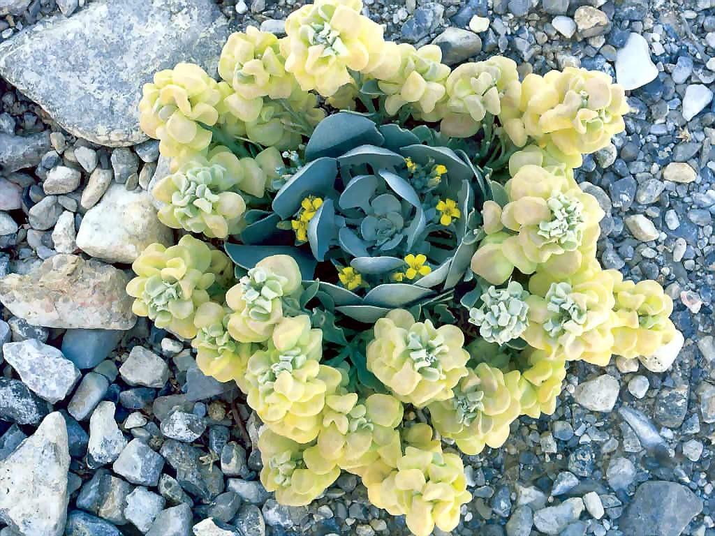 Nature Wallpaper: Mojave Twinpod