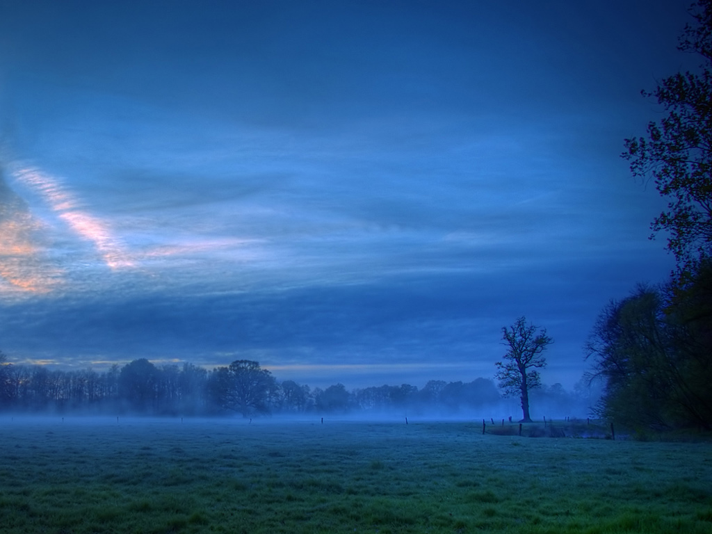 Nature Wallpaper: Morning Mist