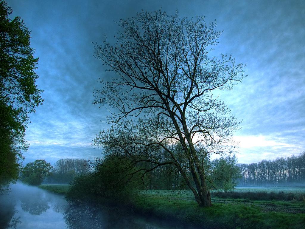 Nature Wallpaper: Morning Mist