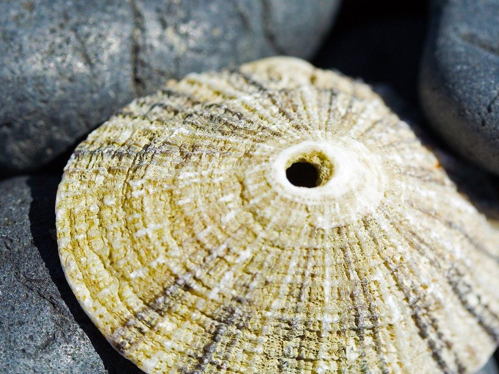 Nature Wallpaper: Shell