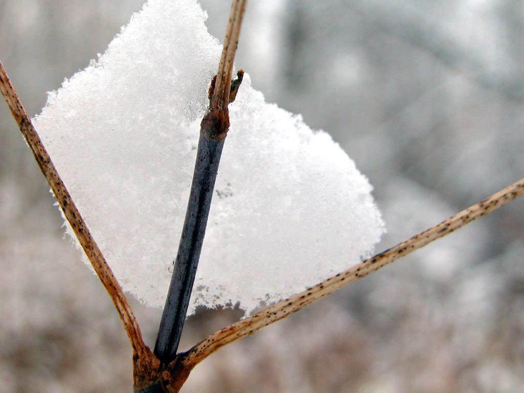 Nature Wallpaper: Winter - Ice