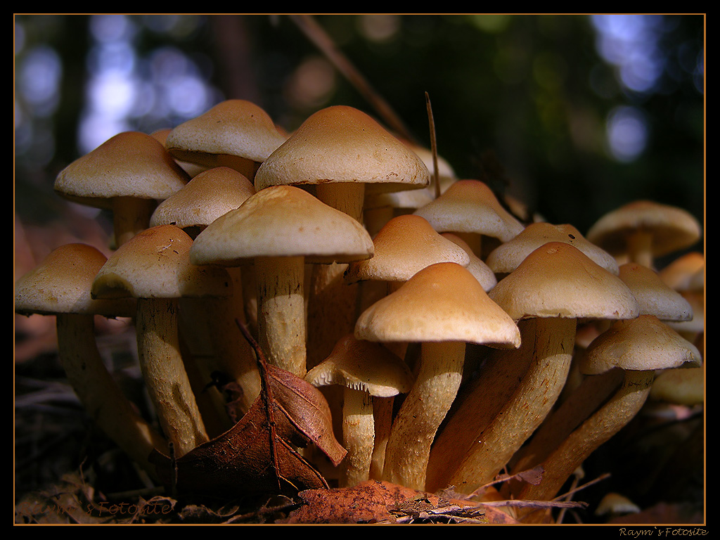 Nature Wallpaper: Mushrooms