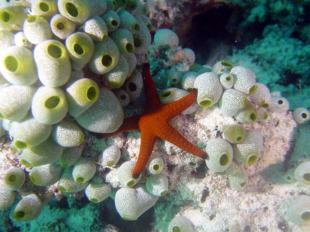 Nature Wallpaper: Ocean Life