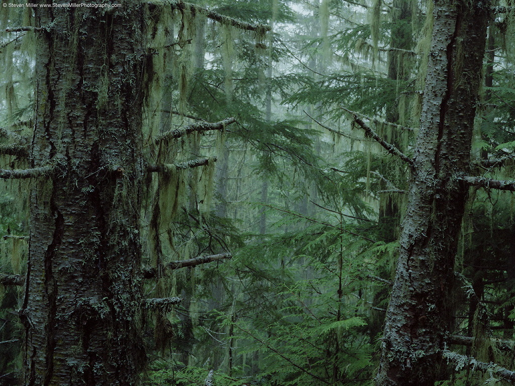 Nature Wallpaper: Olympic National Forest