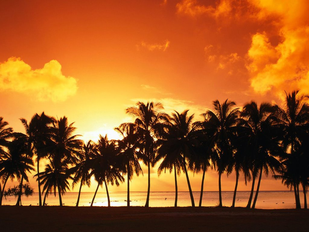 Nature Wallpaper: Palms - Sunset