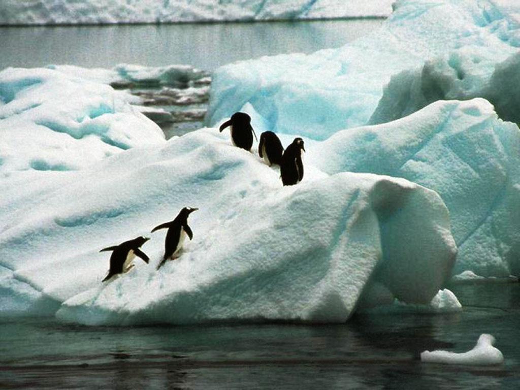 Nature Wallpaper: Penguins in Iceberg