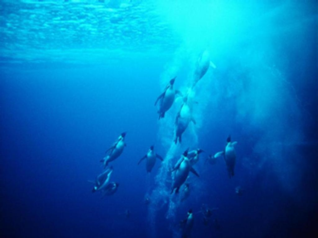 Nature Wallpaper: Penguins Rising