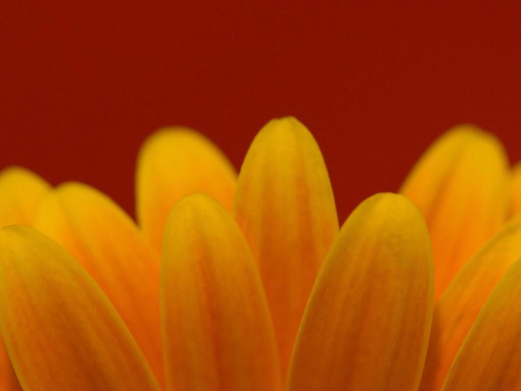 Nature Wallpaper: Petals