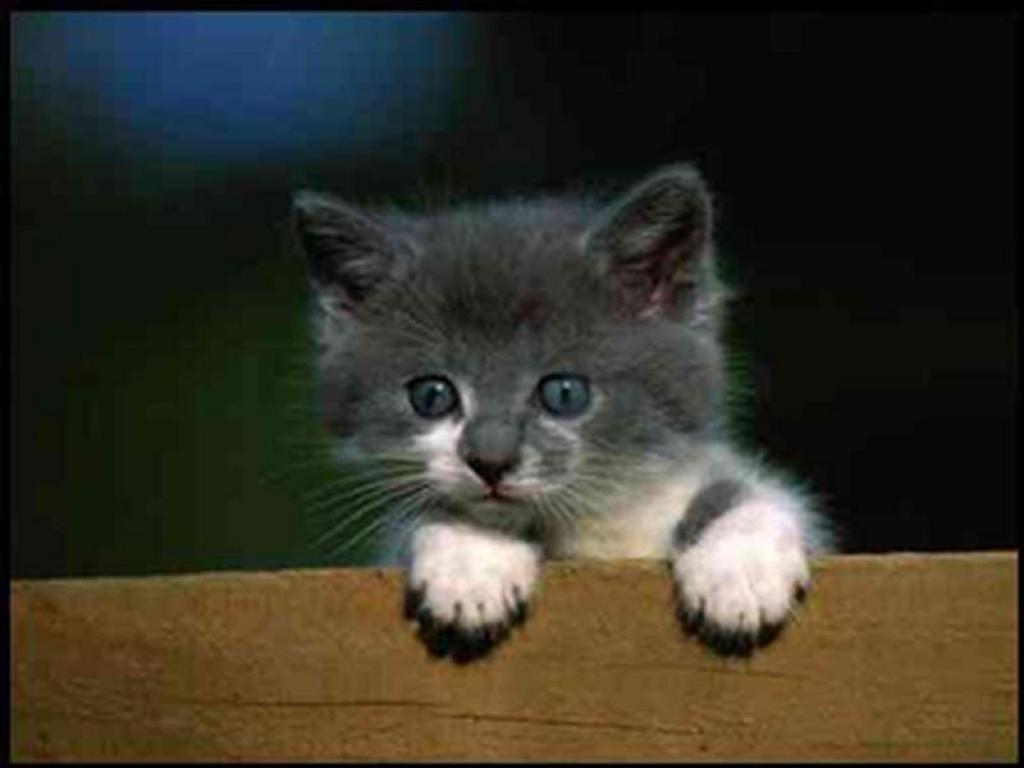 Nature Wallpaper: Pick Me Up Kitten