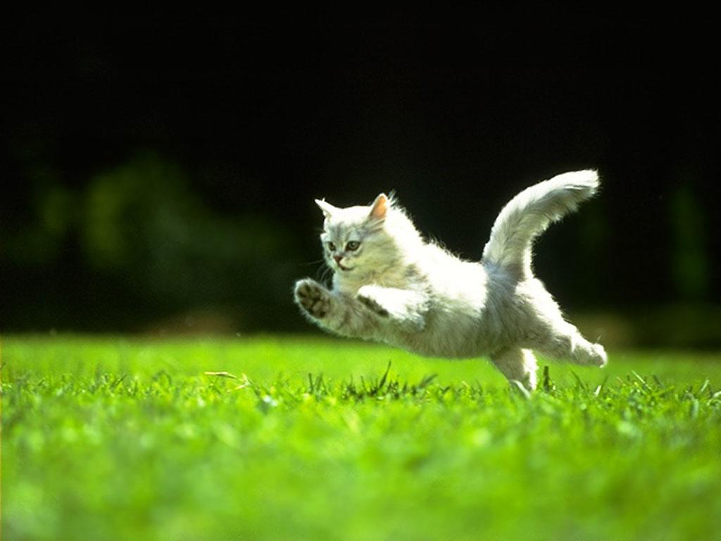 Nature Wallpaper: Playing Kitty