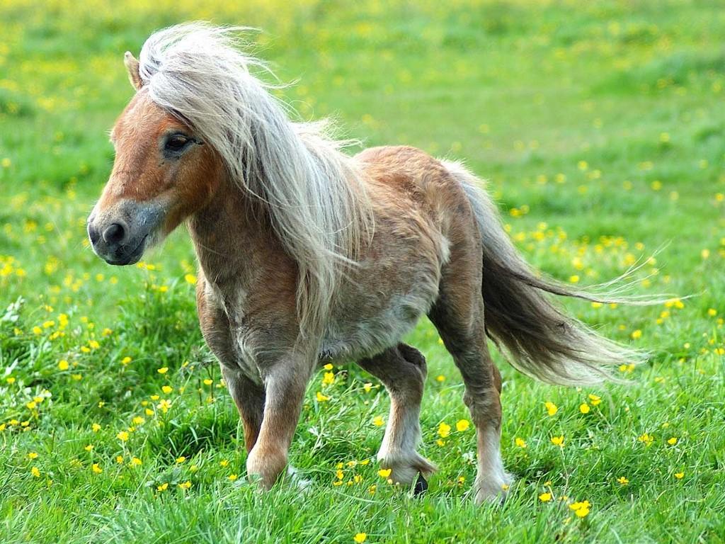 Nature Wallpaper: Pony