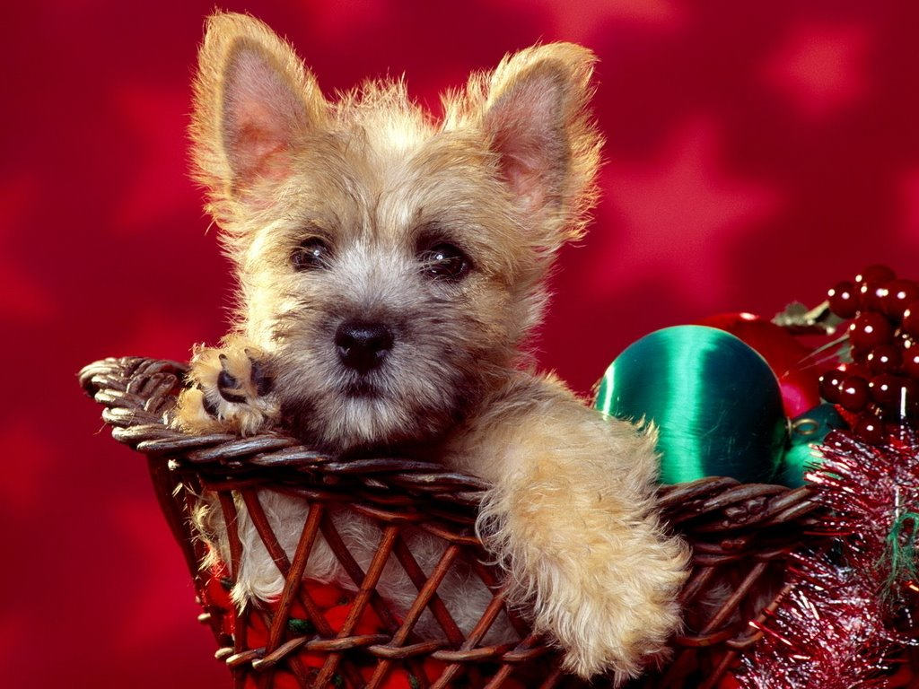 Nature Wallpaper: Puppy Dog - Christmas