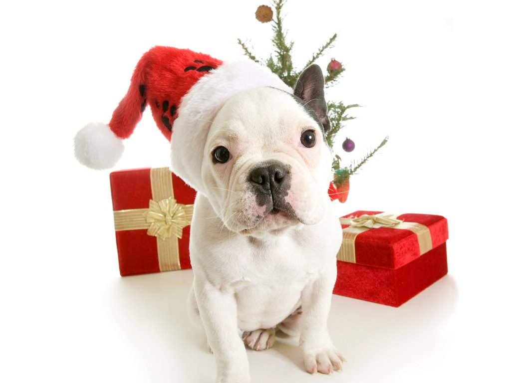 Nature Wallpaper: Puppy - Christmas