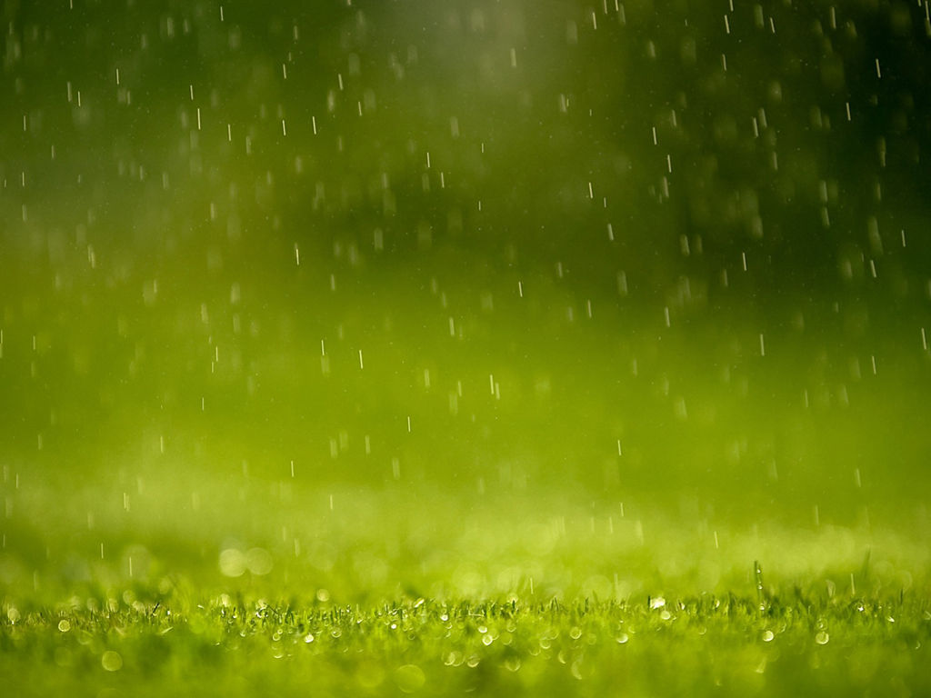 Nature Wallpaper: Rain