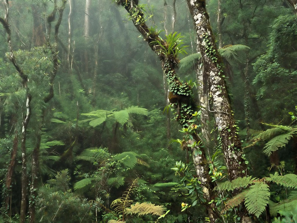 Nature Wallpaper: Rainforest