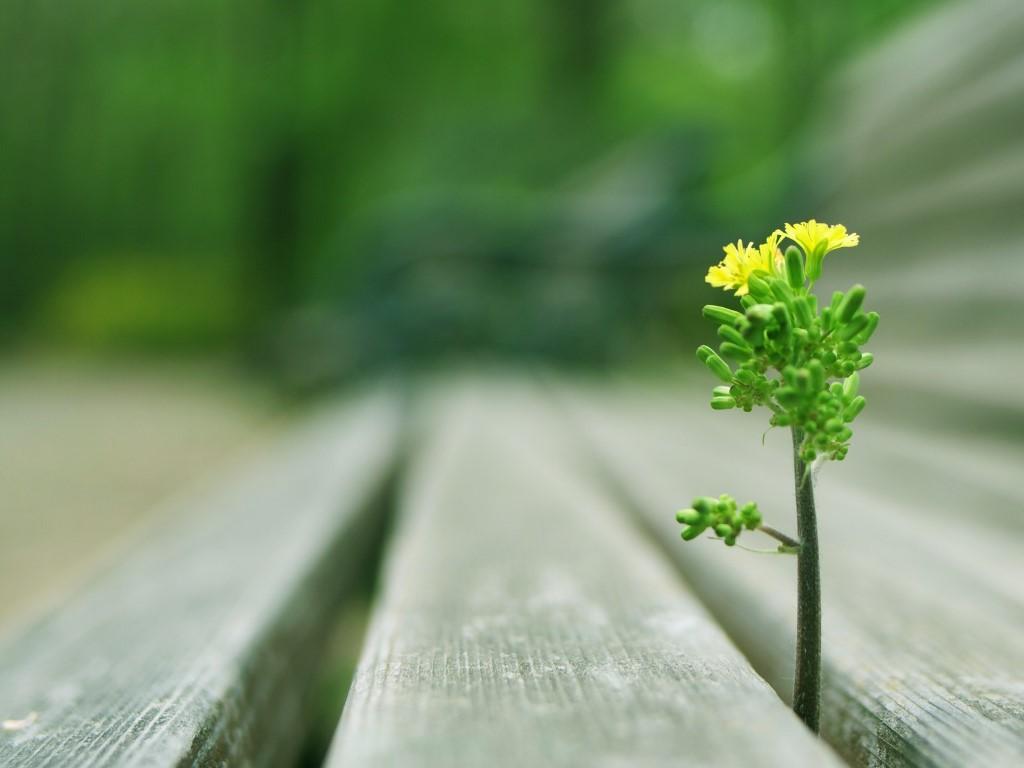 Nature Wallpaper: Rising Flower