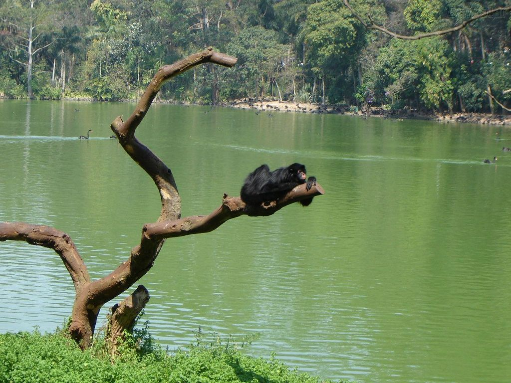 Nature Wallpaper: River and Monkey
