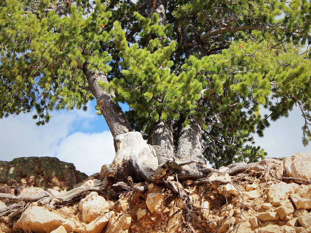 Nature Wallpaper: Roots