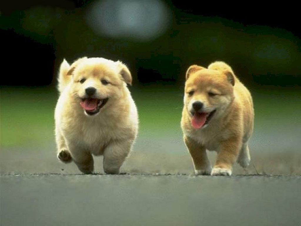 Nature Wallpaper: Running Puppies