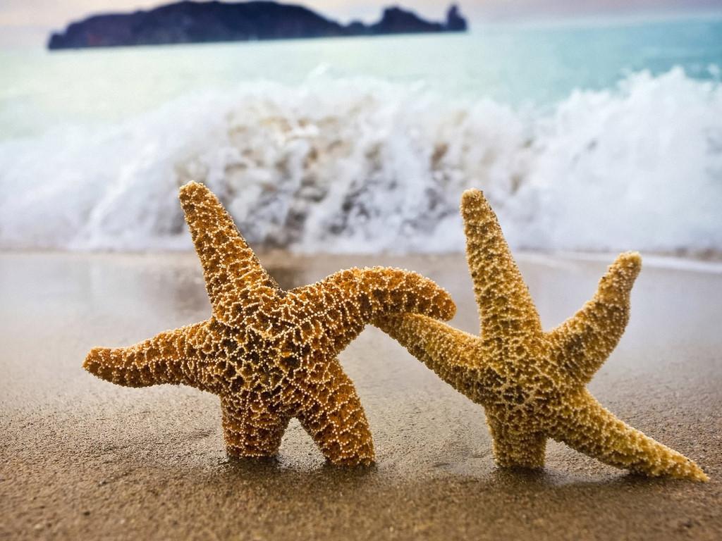 Nature Wallpaper: Sea Stars - Love