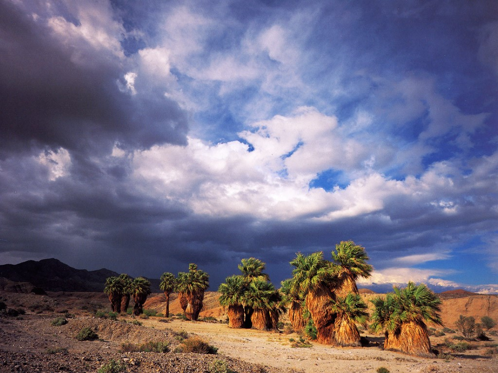 Nature Wallpaper: Seventeen Palms Oasis