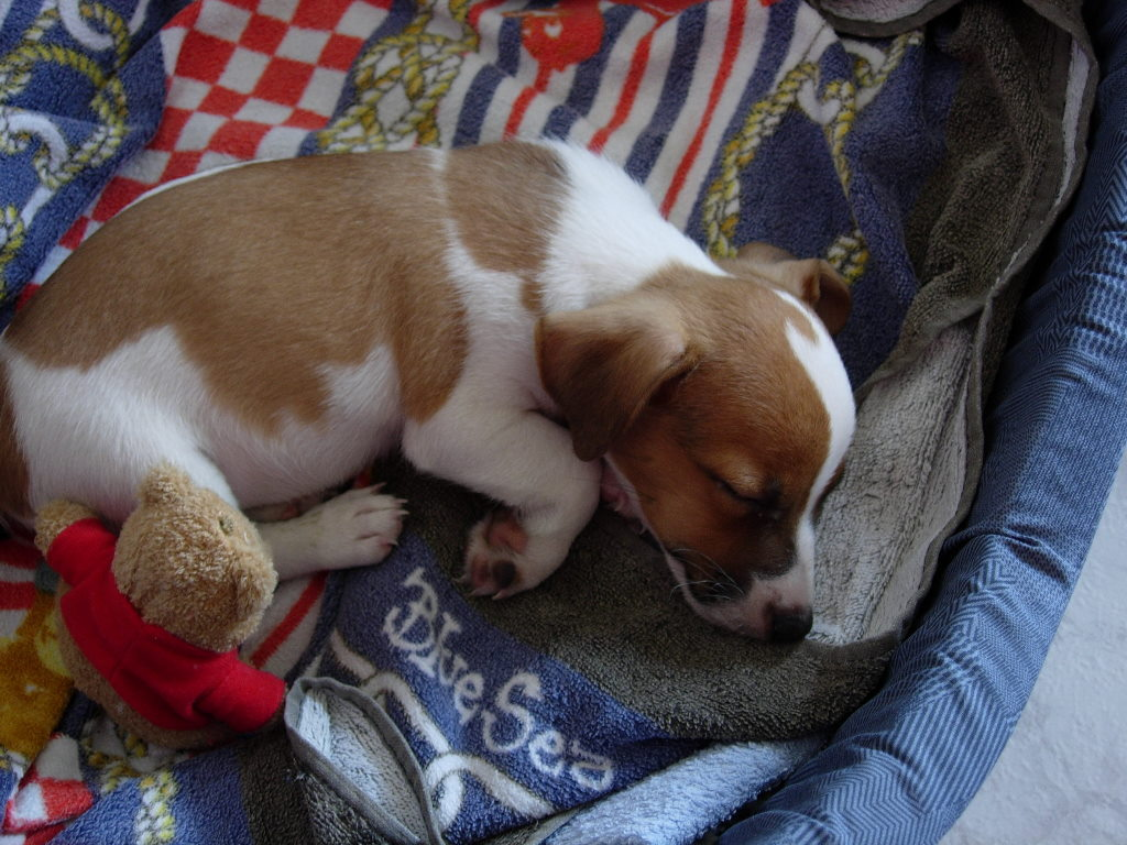 Nature Wallpaper: Sleeping Puppy