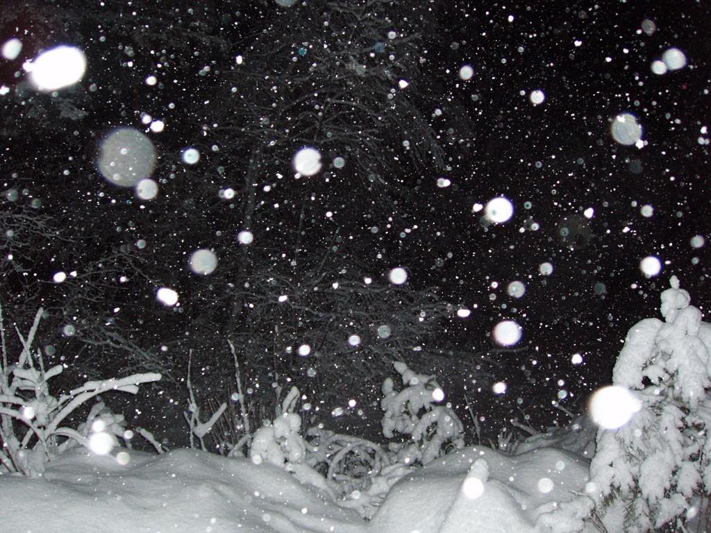 Nature Wallpaper: Snowfall at Night