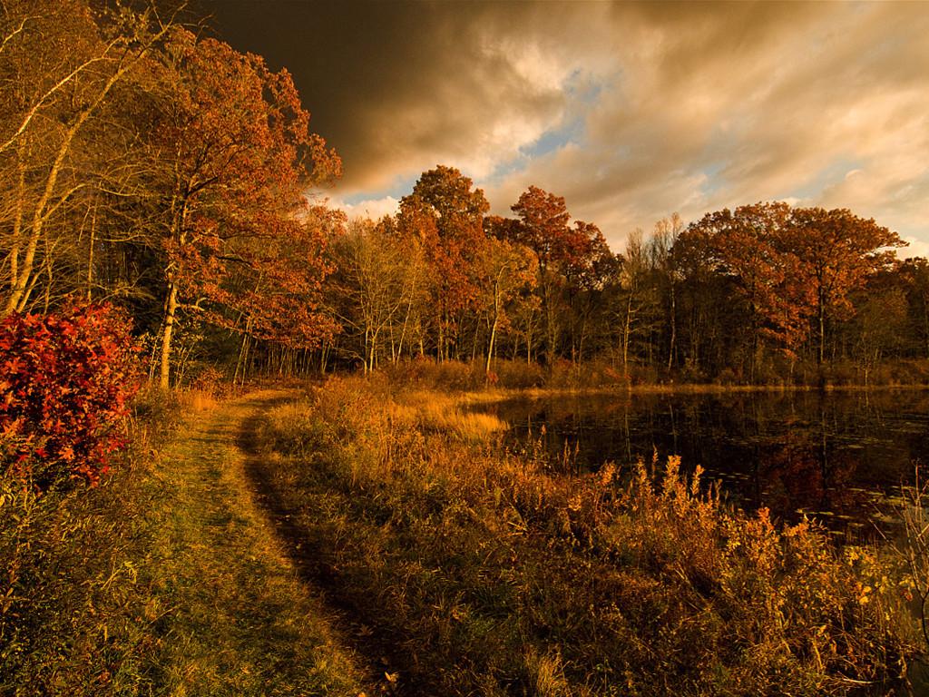 Nature Wallpaper: Still Pond Trail