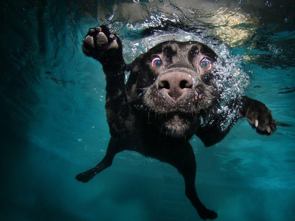 Papel de Parede Gratuito de Natureza : Cão Nadando