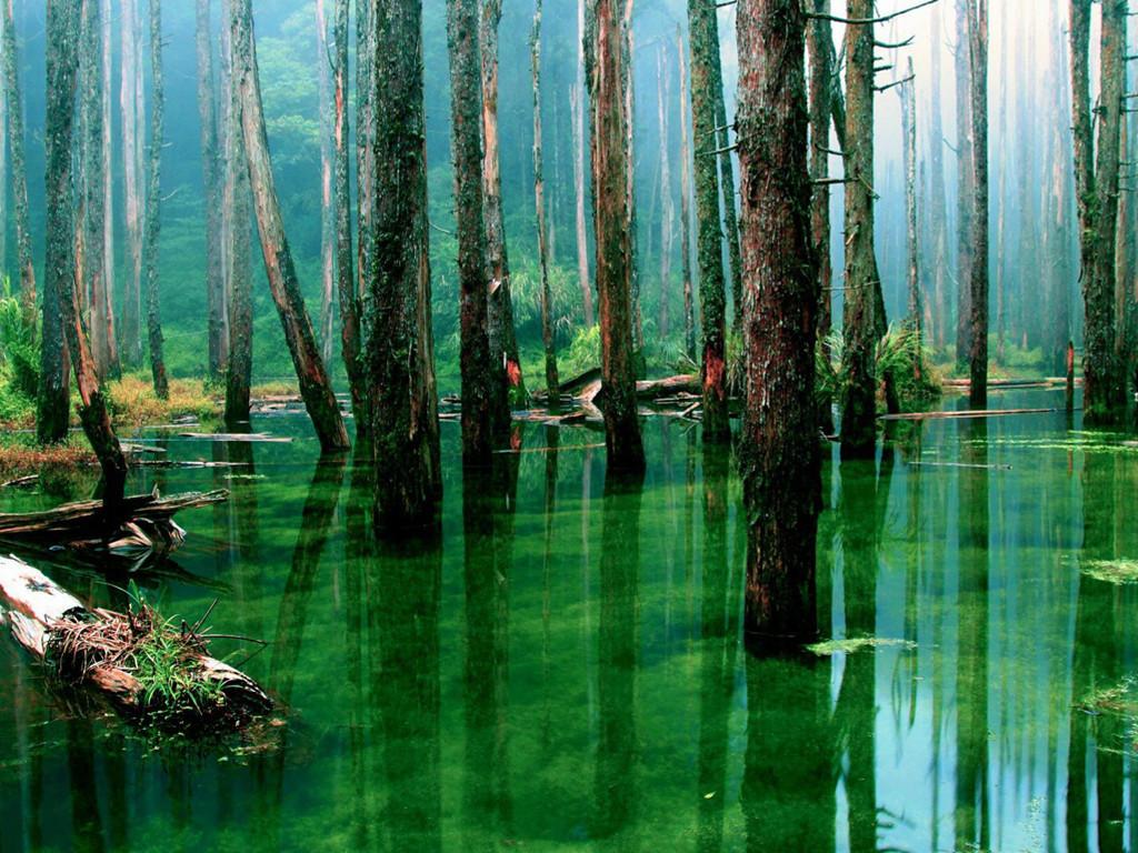 Nature Wallpaper: The Bog