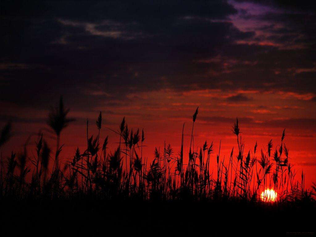 Nature Wallpaper: The Setting Sun