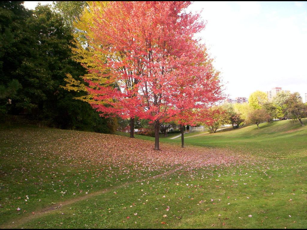 Nature Wallpaper: Toronto - Fall