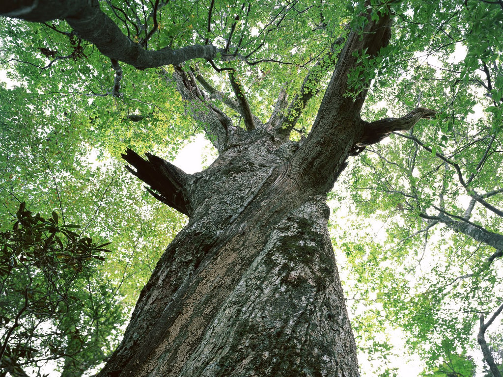 Nature Wallpaper: Tree