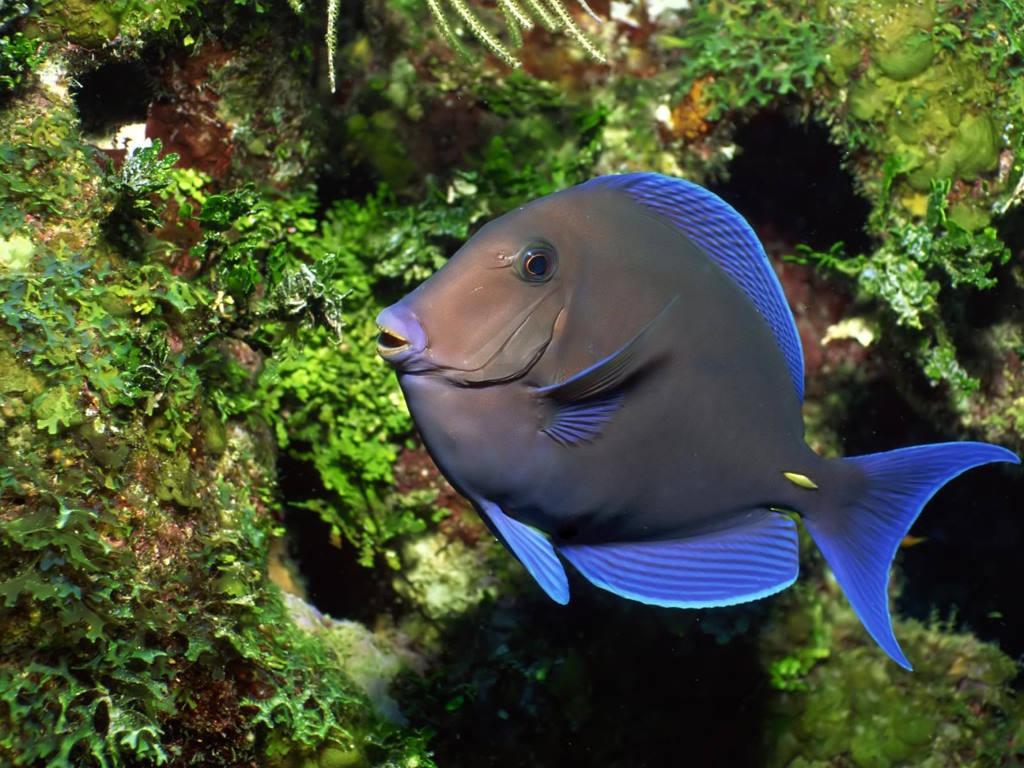 Nature Wallpaper: Tropical Fish