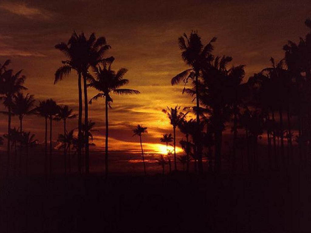 Nature Wallpaper: Tropical Sunset