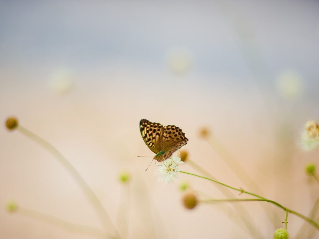 Nature Wallpaper: Ubuntu - Butterfly