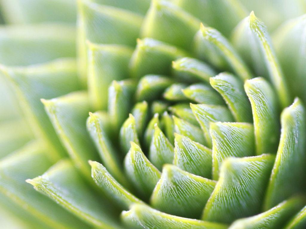 Nature Wallpaper: Ubuntu Official Wallpaper - Green Plant (by Simon Schlegl)
