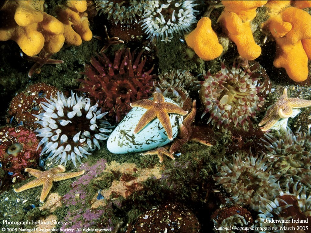 Nature Wallpaper: Underwater Ireland