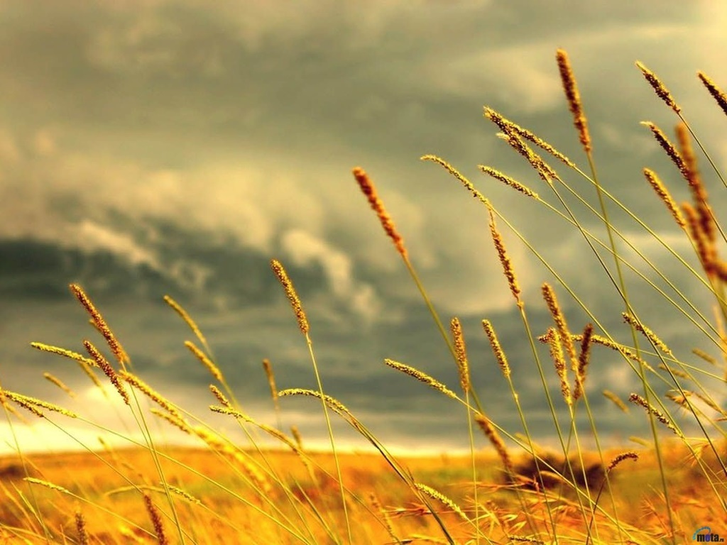 Nature Wallpaper: Upcoming Storm