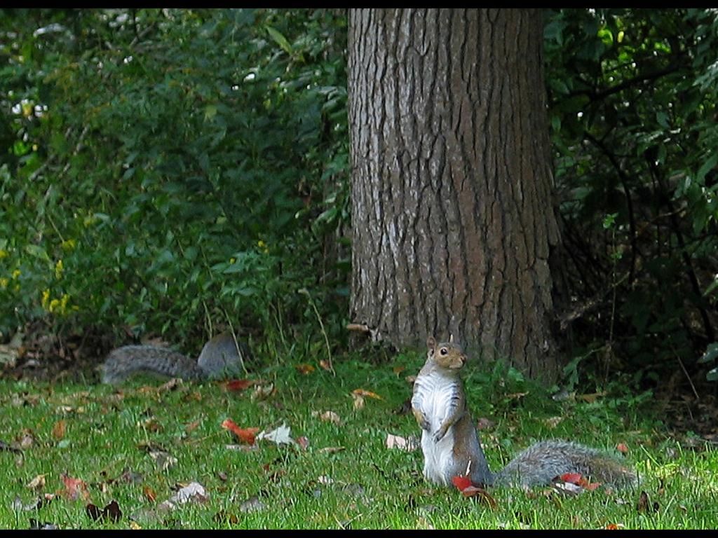 Nature Wallpaper: Waiting for Peanuts